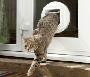 Glass Electronic Pet Door