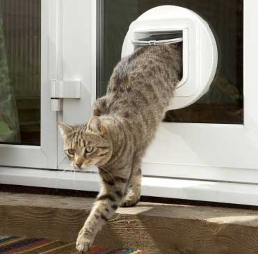 One of the Best Electronic Pet Doors Around